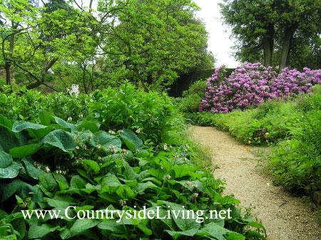 Природный сад сад в естественном